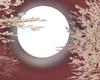 Moon Stars Cloud Addon