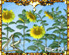 "LK"" Sunflowers FX"