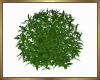Lush Full Plant Derive
