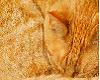 Ginger Kitten interactiv