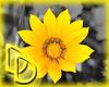 |DD| Flower Splash 1