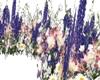 weding flowers perple