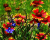 patch of wild flowers