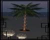 💀 Eveling palm