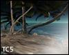 Palms & rocks