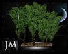  JM Xia Plant