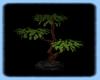 ~R~Green Tree Plant
