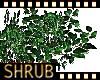 shrub bush grass