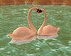 e Swans in Love