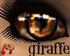 Wild.Eyes Giraffe (f)