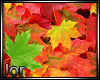 *JK* Autumn Leaves