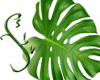 Tropical Leaf Enhancer