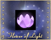 Flower of Light, Purple