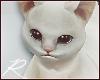 Arm Kitty | 1