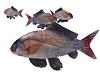 TF* Real Fish animated