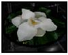 Magnolia Round Rug