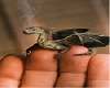 dragon in hand