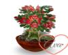 Flower Pot Flowers