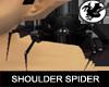 Black Shoulder Spider