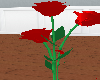 [DM]Animated Roses