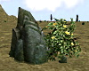 Boulder with Flowers