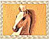 DesertSpirit - CloseUp