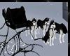 .:D:.White Night  Husky