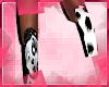B| Dalmatians Bih