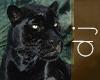 Black Panther Green Eyes