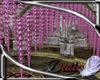 single wisteria vine