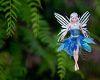 Fairy Nests