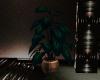 Elegant Office Plant