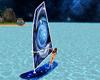 Dolphin Surfing