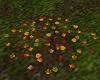 !Autumn Fall Leaves