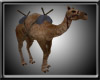 [SV] Desert Camel
