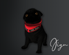 Black Pug M
