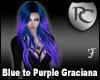 Blue to Purple Graciana