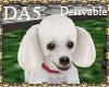 (A) Poodle Pet