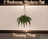 Modern Apt Hanging Plant