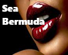 Sea Bermuda