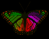 💎 Rainbow ButterFly4