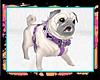 ツ Pastel Pug Pet [frn]