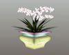 DER Flower Pot 2