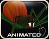 !NC Creepy Spidy Spider