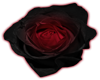 Red and black rose