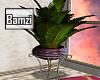 .B. Morocco Plant