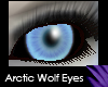 Arctic Wolf Eyes