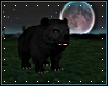 *N* Bear Cub