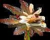 Brown/Beige Tulips -L