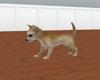 Chihuahua Pet-Animated